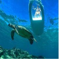 eco wildlife paddle