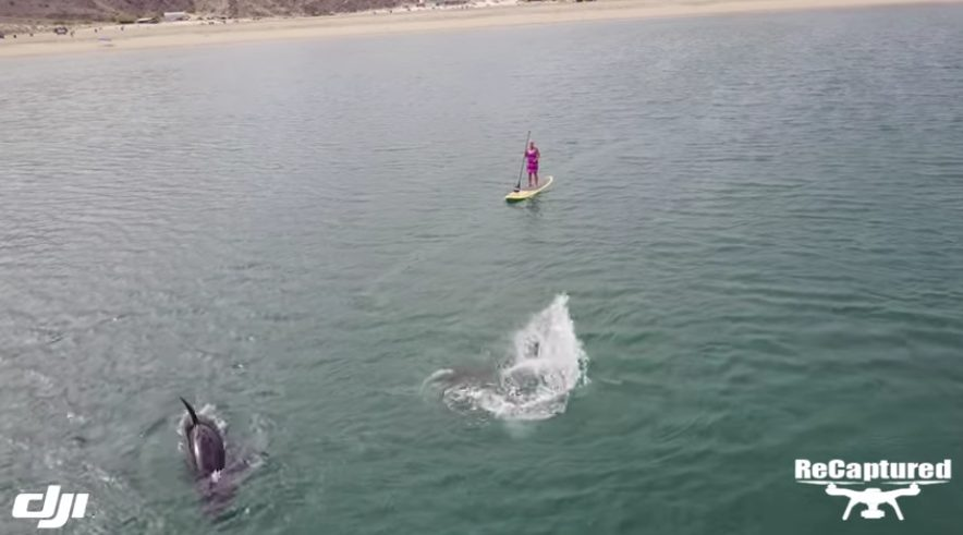 """Featured image for """"Lady with orcas paddle boarding Baja California"""""""